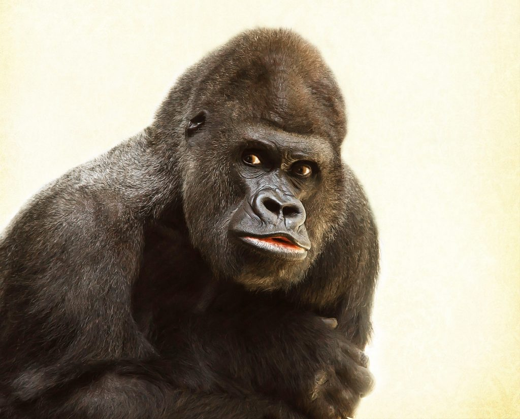 black-gorilla-in-close-up-photography-39571