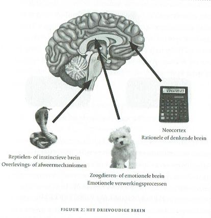 plaatje 3 lagen brein